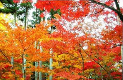 广东境内叫南岭国家森林公园,里面的小黄山景色非常不错.